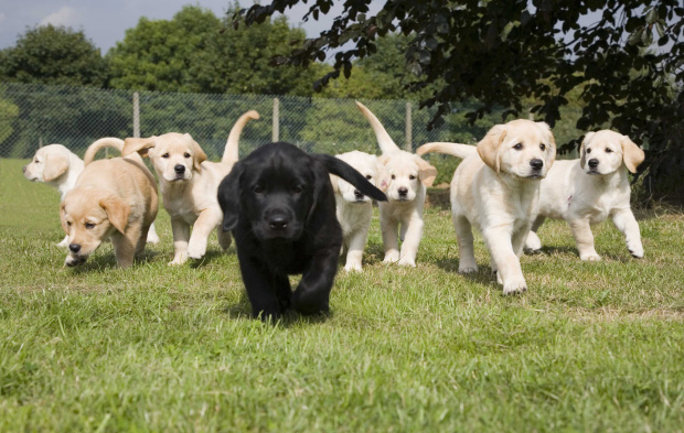 Dog friendly award winning pub forms partnership with Guide Dogs for the Blind